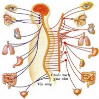Il cervello parla, il sistema immunitario risponde: la Psiconeuroendocrinoimmunologia