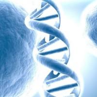 """Ricerca: il DNA di un bimbo dell'Età della pietra """"riscrive"""" l'origine dei moderni esseri umani"""