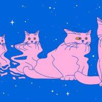 """Le Scienze: """"I gatti di Schrödinger dal mondo quantistico alla vita reale"""""""