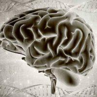 Scoperto un universo multi dimensionale all'interno del nostro cervello
