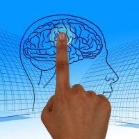 """Ansa: """"Trovato nel cervello l'interruttore che focalizza l'attenzione"""""""
