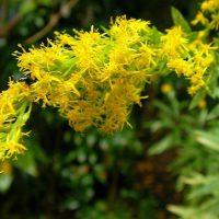 """Ansa: """"Le piante in pericolo emettono lo stesso 'odore della paura' """""""