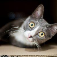 Perché il gatto di Schrödinger può esistere come esperimento? La risposta è in uno studio italiano